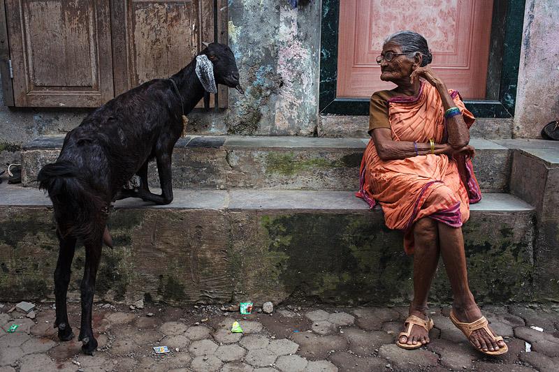 india_mumbai_ashok_nagar_old_woman_goat_animal